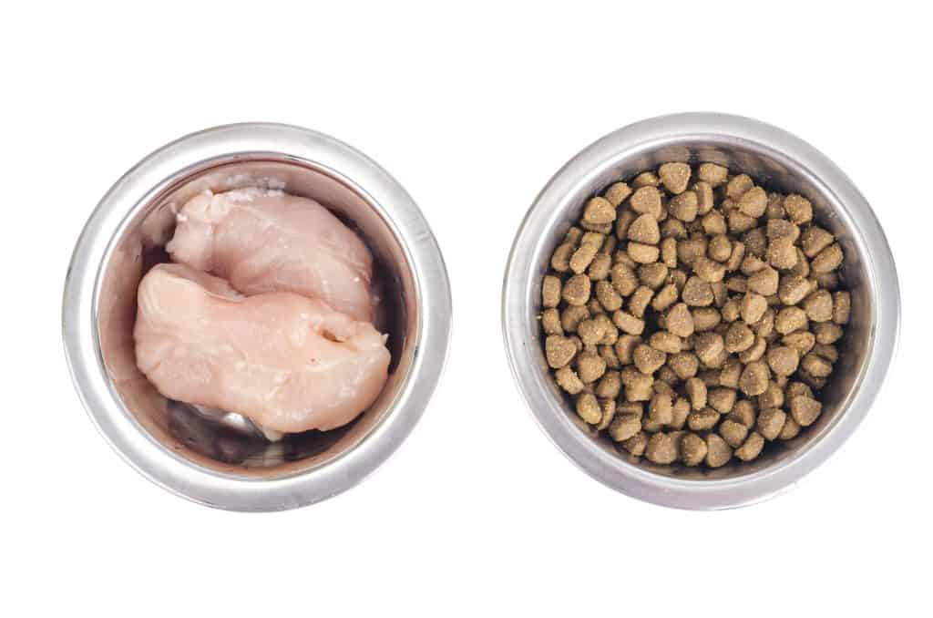 Can Cats Eat Raw Chicken? What Are the Risks Involved in Feeding Cats Raw Chicken? 1