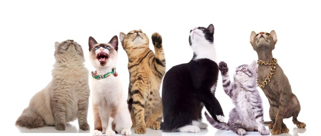 Can Cats Get Parvo? Everything You Need To Know About Feline Parvo 3