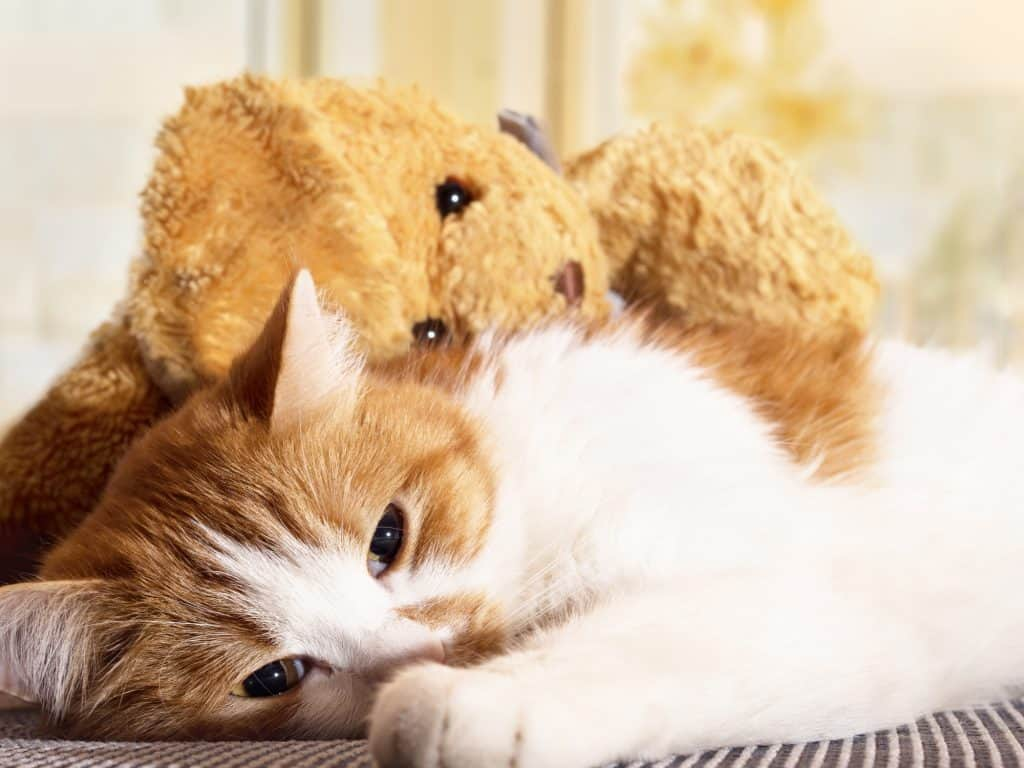 Can Cats Get The Flu