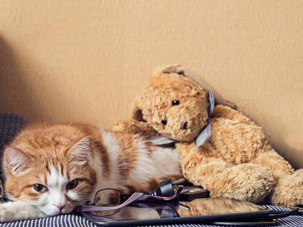 Can Cats Get The Flu? The Lowdown On Cat Flu 2
