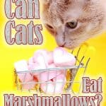 Can Cats Eat Marshmallows? What Should You Do If Your Cat Eats Marshmallows?