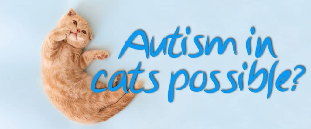 Can Cats Have Autism
