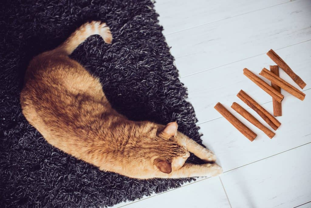 Can Cats Eat Cinnamon? What Happens If Your Cat Is Exposed to Cinnamon? 3