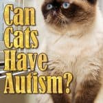 Can Cats Have Autism? How Can Cats Exhibit Autistic Tendencies?