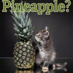 Can Cats Eat Pineapple? Is This Fruit Good Or Bad For Your Cat?