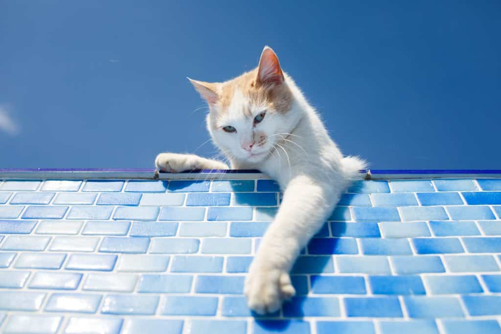 Can Cats Swim? Don't Cats Hate Water? 4