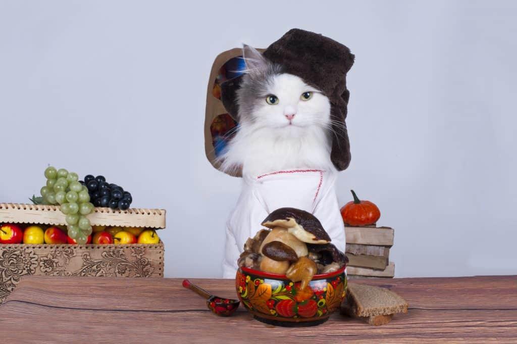 Can Cats Eat Mushrooms