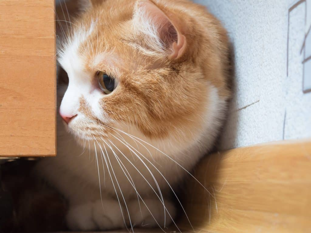 Can Cats Have Autism? How Can Cats Exhibit Autistic Tendencies? 3