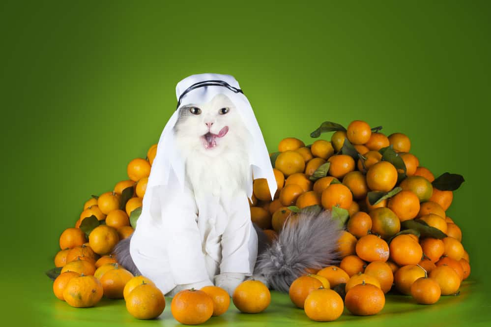 Can Cats Eat Oranges? What Should You Do If Your Cat Eats Oranges? 1