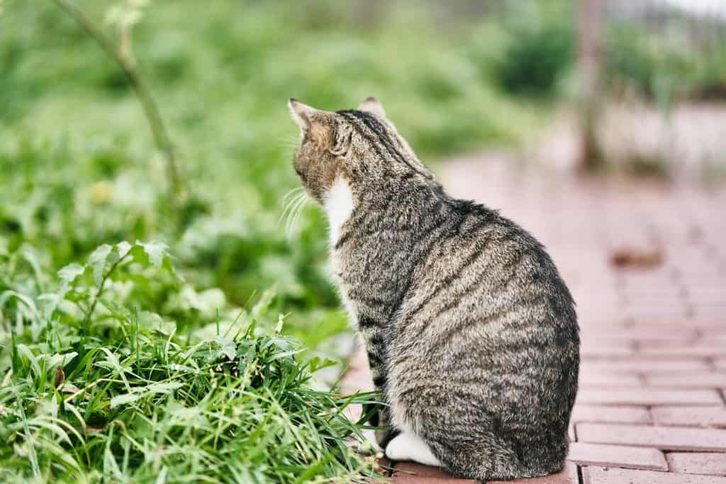 Can Cats Have Autism? How Can Cats Exhibit Autistic Tendencies? 4