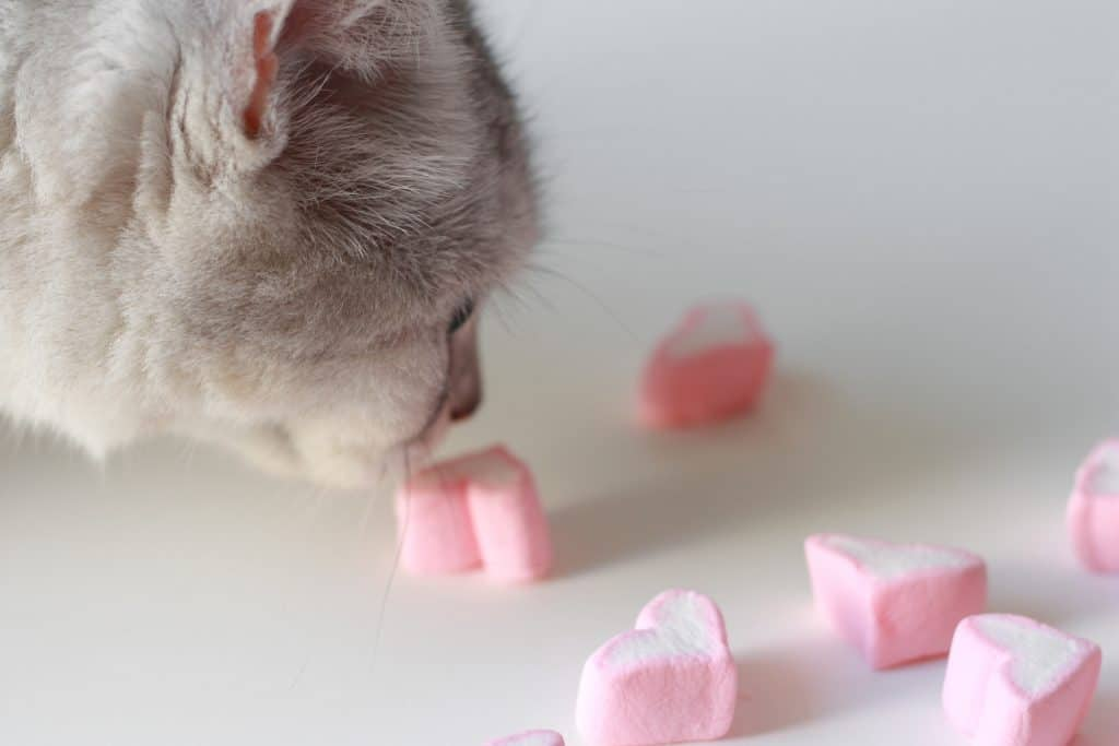 Can Cats Eat Marshmallows