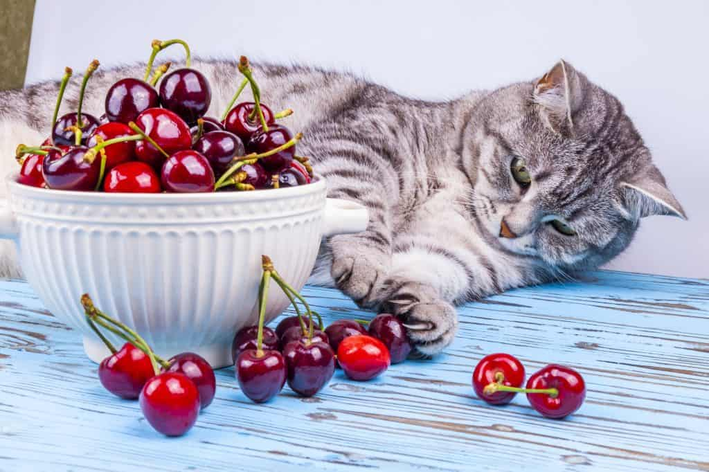 Can Cats Eat Cherries? 5 Burning Questions Answered 4