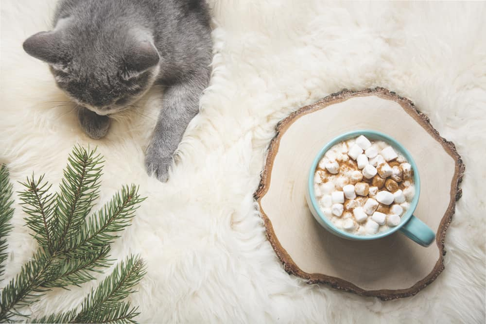 Can Cats Eat Marshmallows? What Should You Do If Your Cat Eats Marshmallows? 2