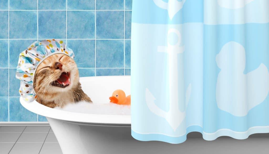 Can Cats Swim?