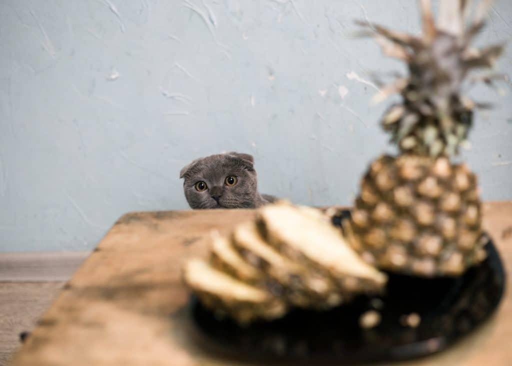 Can Cats Eat Pineapple? Is This Fruit Good Or Bad For Your Cat? 3