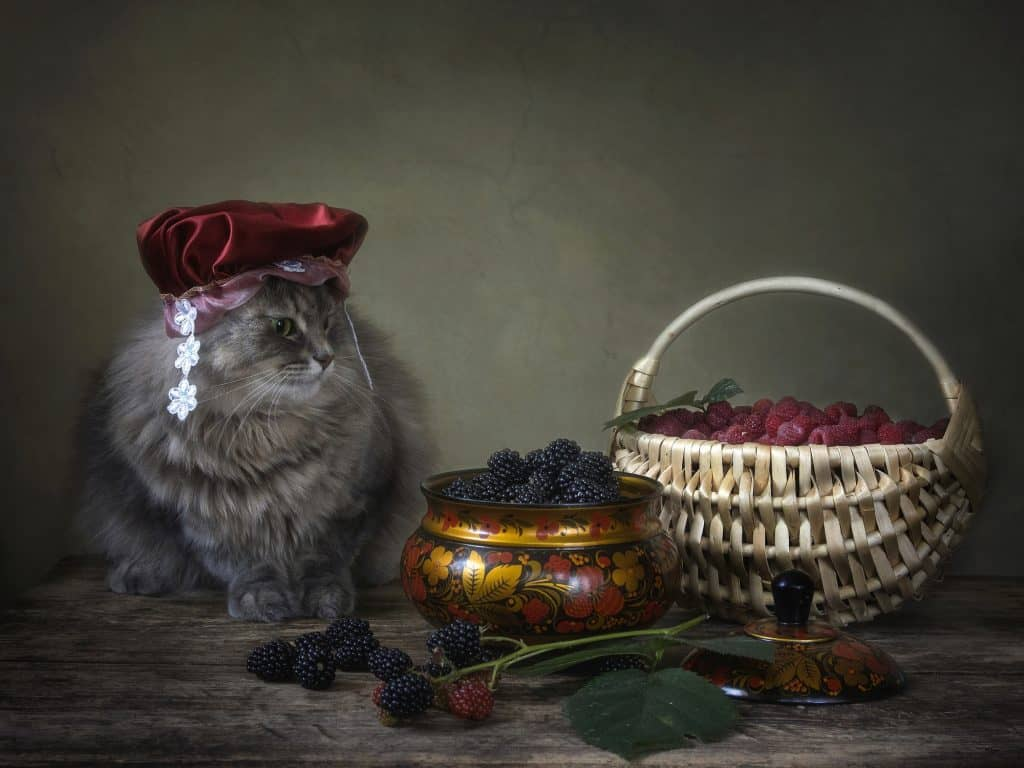 Can Cats Eat Raspberries? Is This Berry Good For Your Kitty? 3