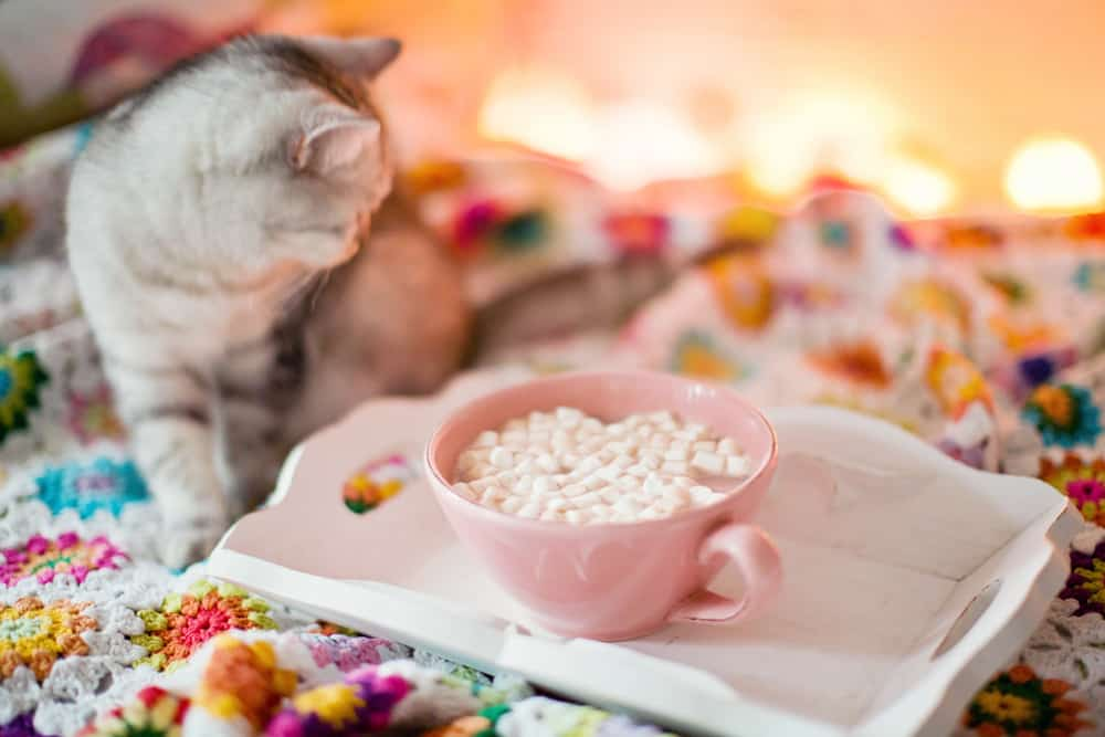 Can Cats Eat Marshmallows? What Should You Do If Your Cat Eats Marshmallows? 3