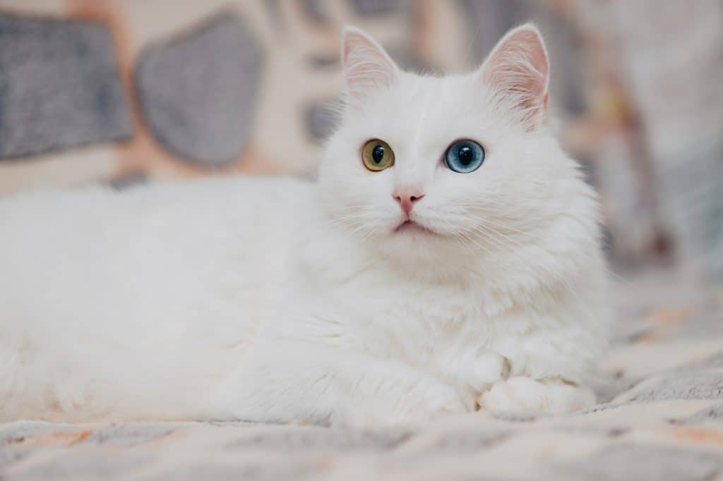 Can Cats Have Autism? How Can Cats Exhibit Autistic Tendencies? 2