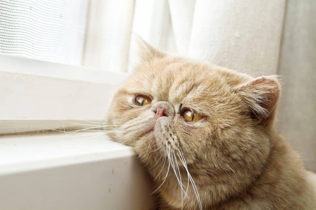 Can Cats Have Autism? How Can Cats Exhibit Autistic Tendencies? 1