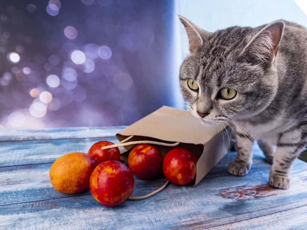 Can Cats Eat Oranges? What Should You Do If Your Cat Eats Oranges? 2