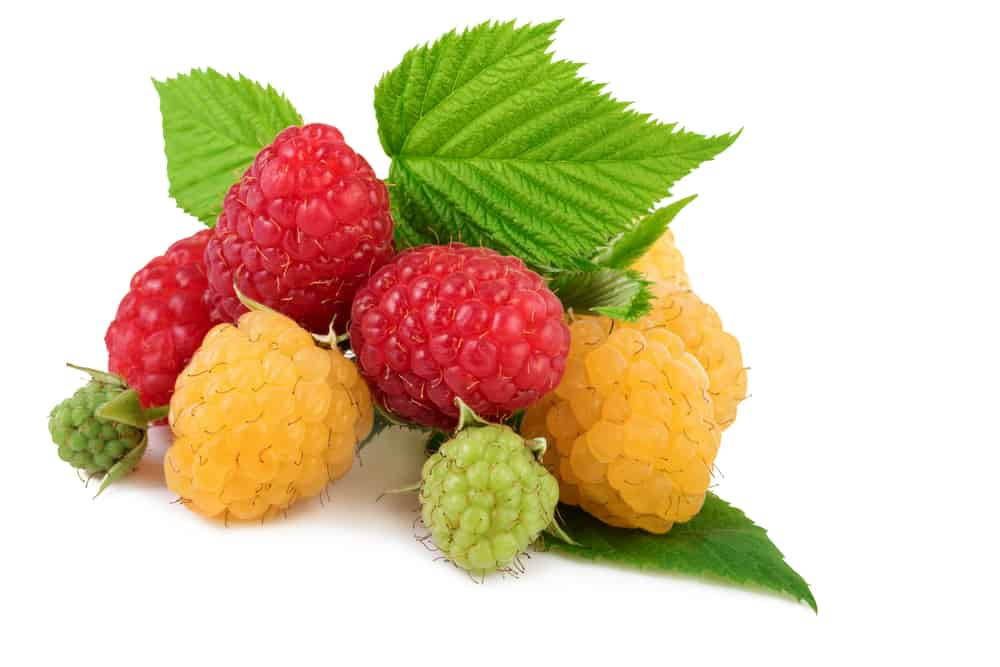 Can Cats Eat Raspberries? Is This Berry Good For Your Kitty? 1