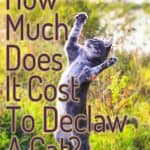 How Much Does It Cost to Declaw a Cat?