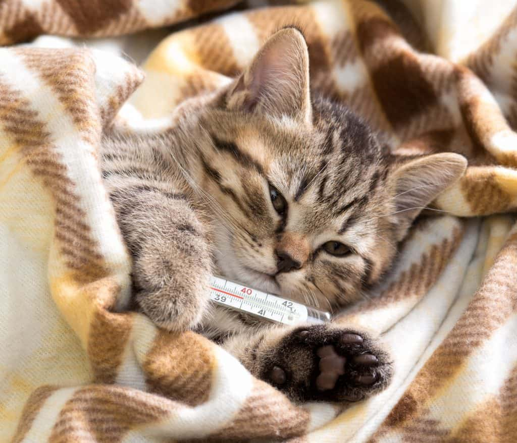 Can Cats Get Colds? What Should You Do If Your Cat Has a Cold? 2