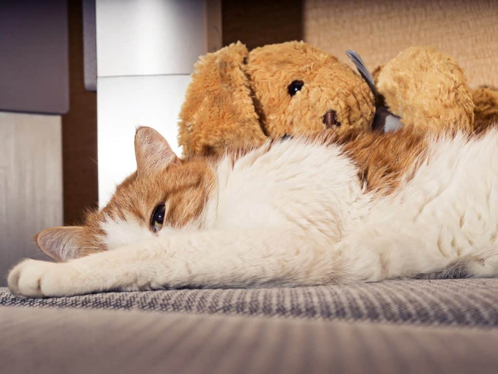 Can Cats Get Colds? What Should You Do If Your Cat Has a Cold? 1