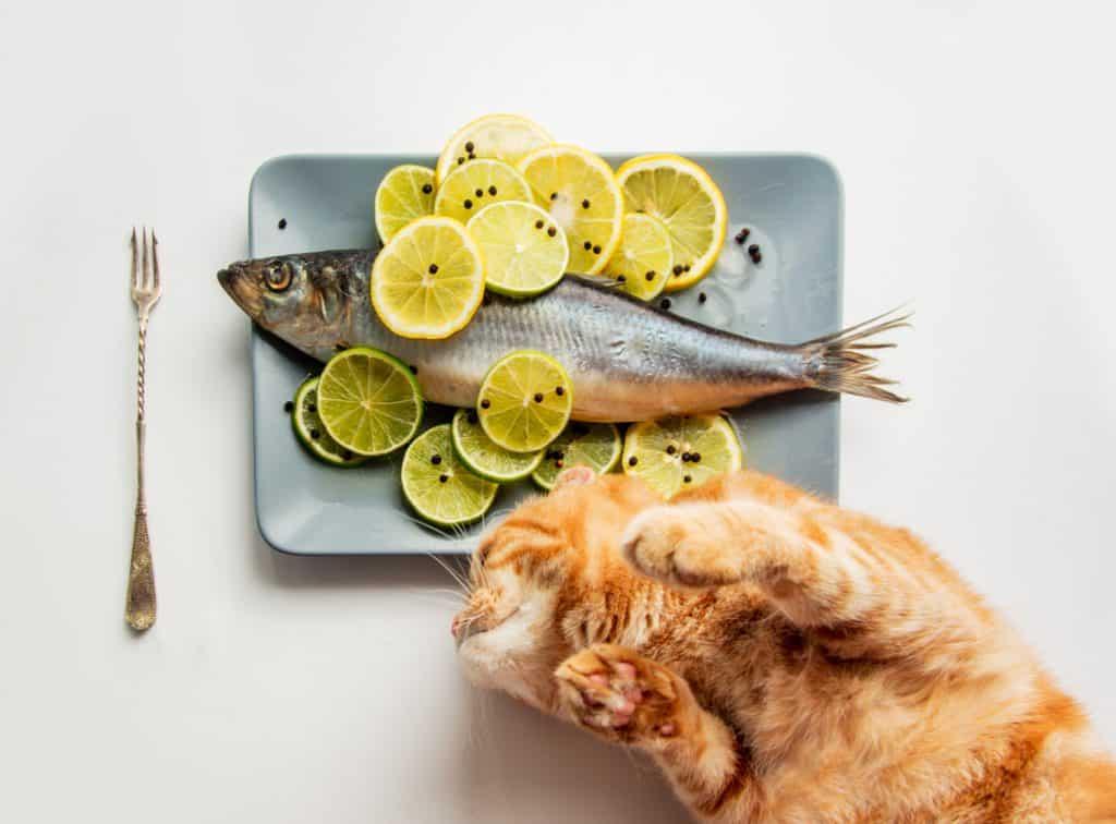 Can Cats Eat Lemon? What Happens If Your Cat Eats Lemons? 1