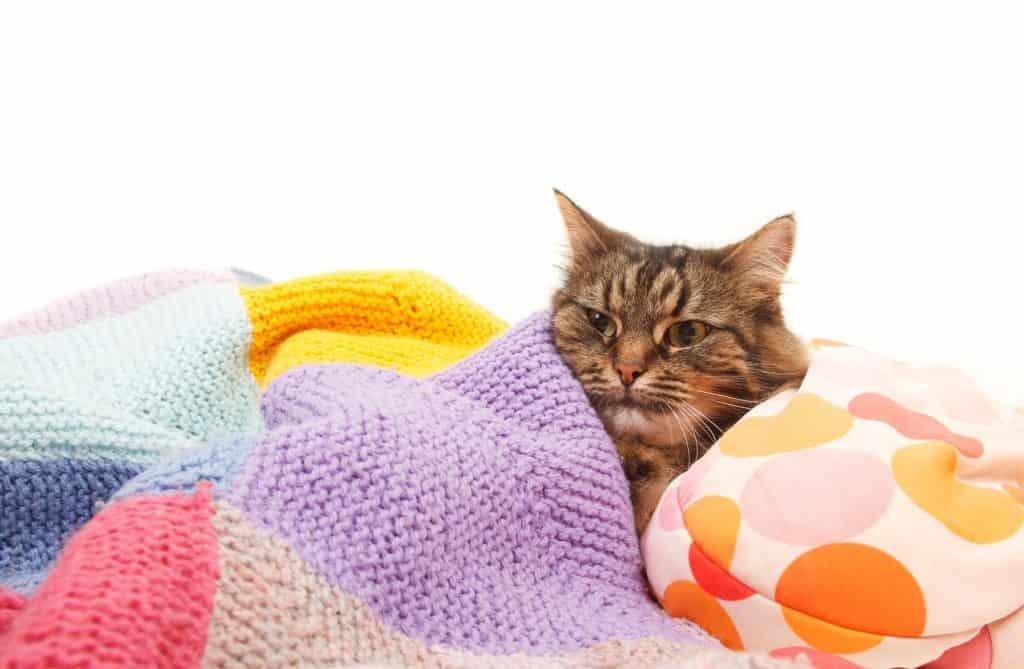 Can Cats Get Colds