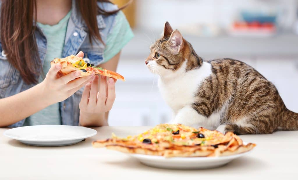 Can Cats Eat Olives? Can Cats Get Some Health Benefits from Olives? 3