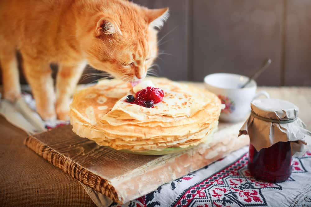 They're Fluffy And Oh So Yummy, Can Cats Eat Pancakes? 3
