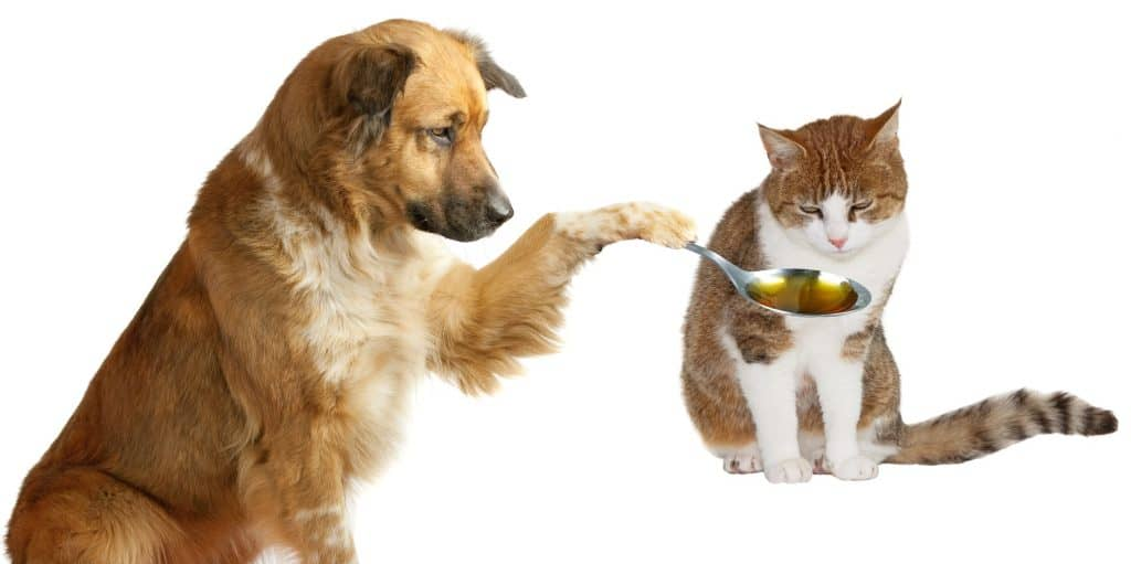 Best Vitamins For Cats