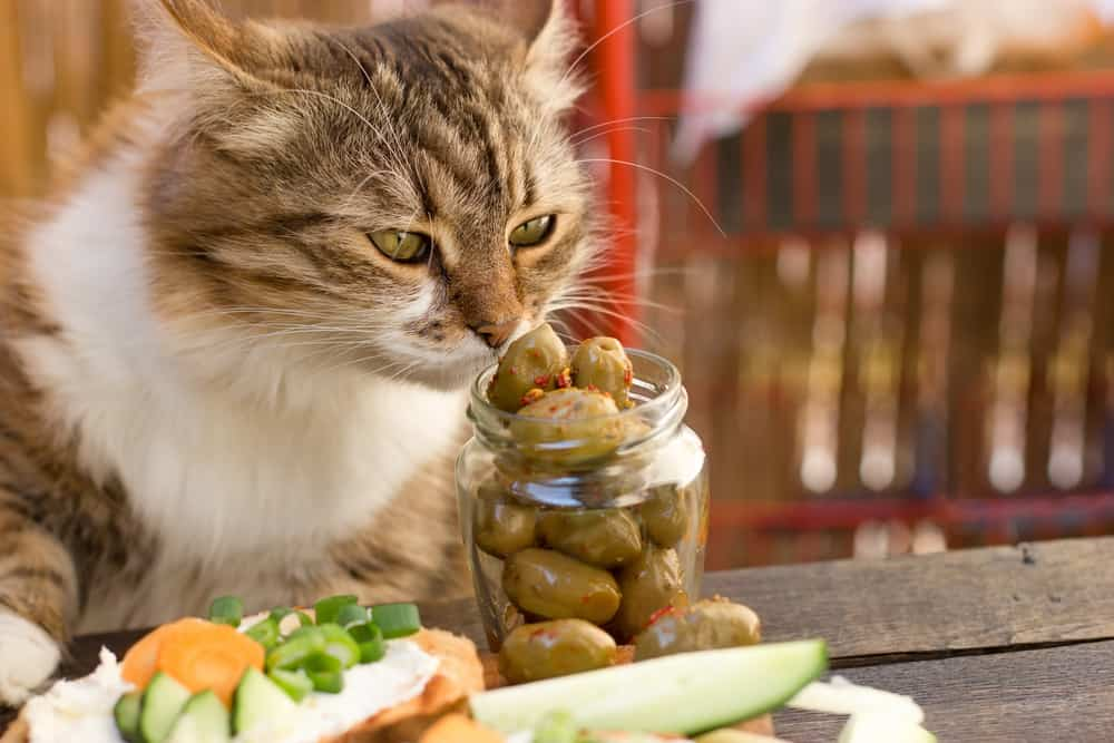 Can Cats Eat Olives? Can Cats Get Some Health Benefits from Olives? 2