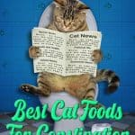 [year]'s Best Cat Food For Constipation: Gut Health-Focused Nutrition