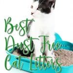 [year] Best Dust Free Cat Litter: Get The Dust and Funk Off Your Homes
