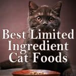 The Best Limited Ingredient Cat Food for Felines with Allergies