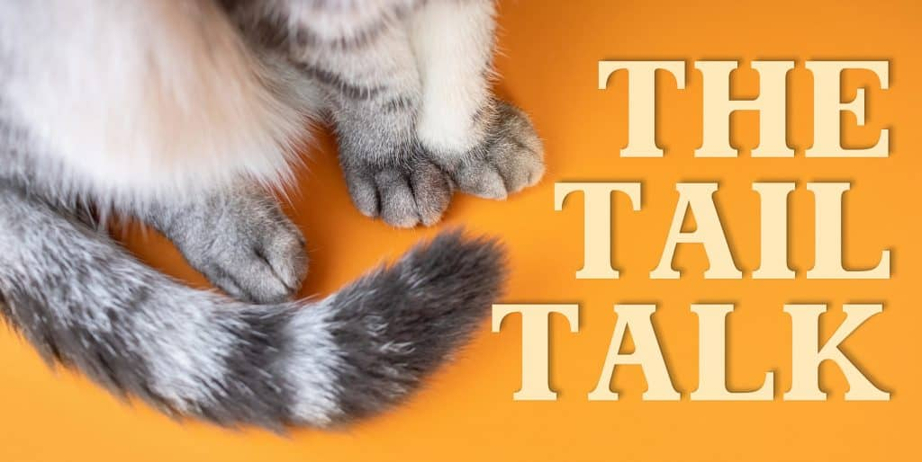 Can Cats Control Their Tails