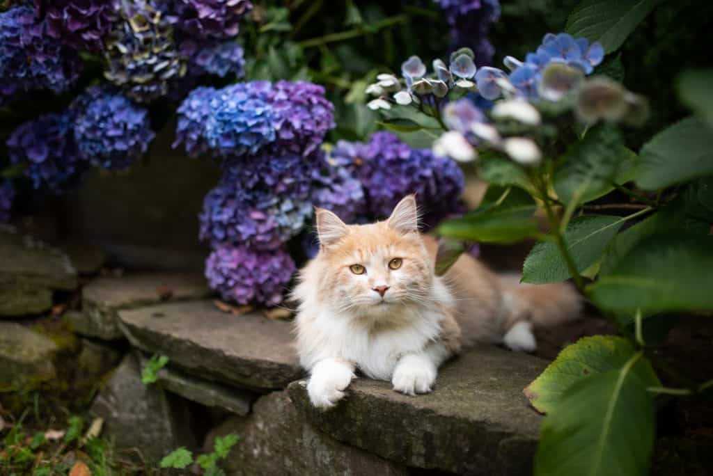 Everything You Need To Know On How To Keep Cats Out Of Plants 4
