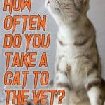 How Often Do You Take a Cat to the Vet? Is Annual Health Checkup Necessary?