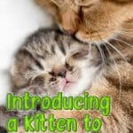 Your Complete Guide On How To Introduce A Kitten To A Cat