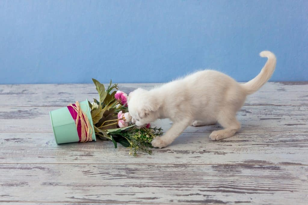 Everything You Need To Know On How To Keep Cats Out Of Plants 1