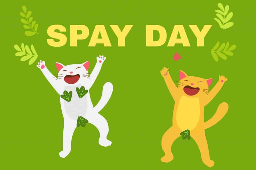 How Much Does It Cost To Spay A Cat