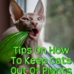 Everything You Need To Know On How To Keep Cats Out Of Plants