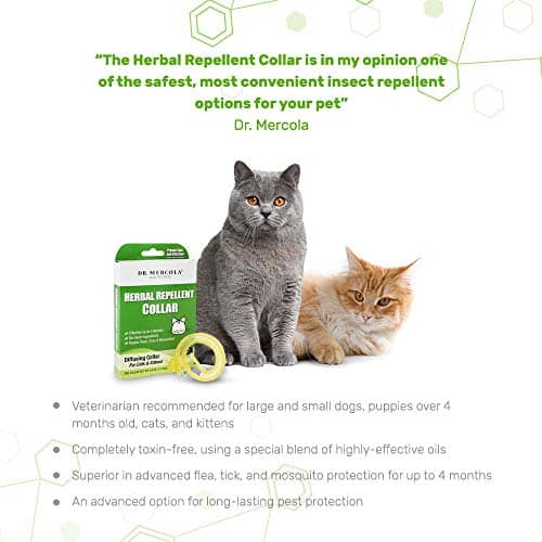 Best Cat Flea Collars for [year]: 7 Top Products to Get Rid of Pests 17