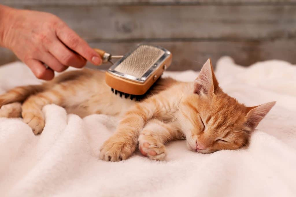 Can Cats Get Dandruff? Is It Okay To Just Brush It Off? 3