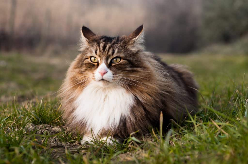 10 Best Cat Food For Shedding + Tips On Managing Hair Loss 1