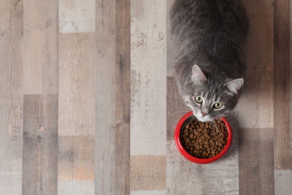 Best Dry Cat Food for Diarrhea