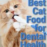 Best Cat Food for Dental Health: A Comprehensive Guide