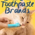 8 Best Cat Toothpaste to Try This [year]! Can You Use a Human Toothpaste for Cats?